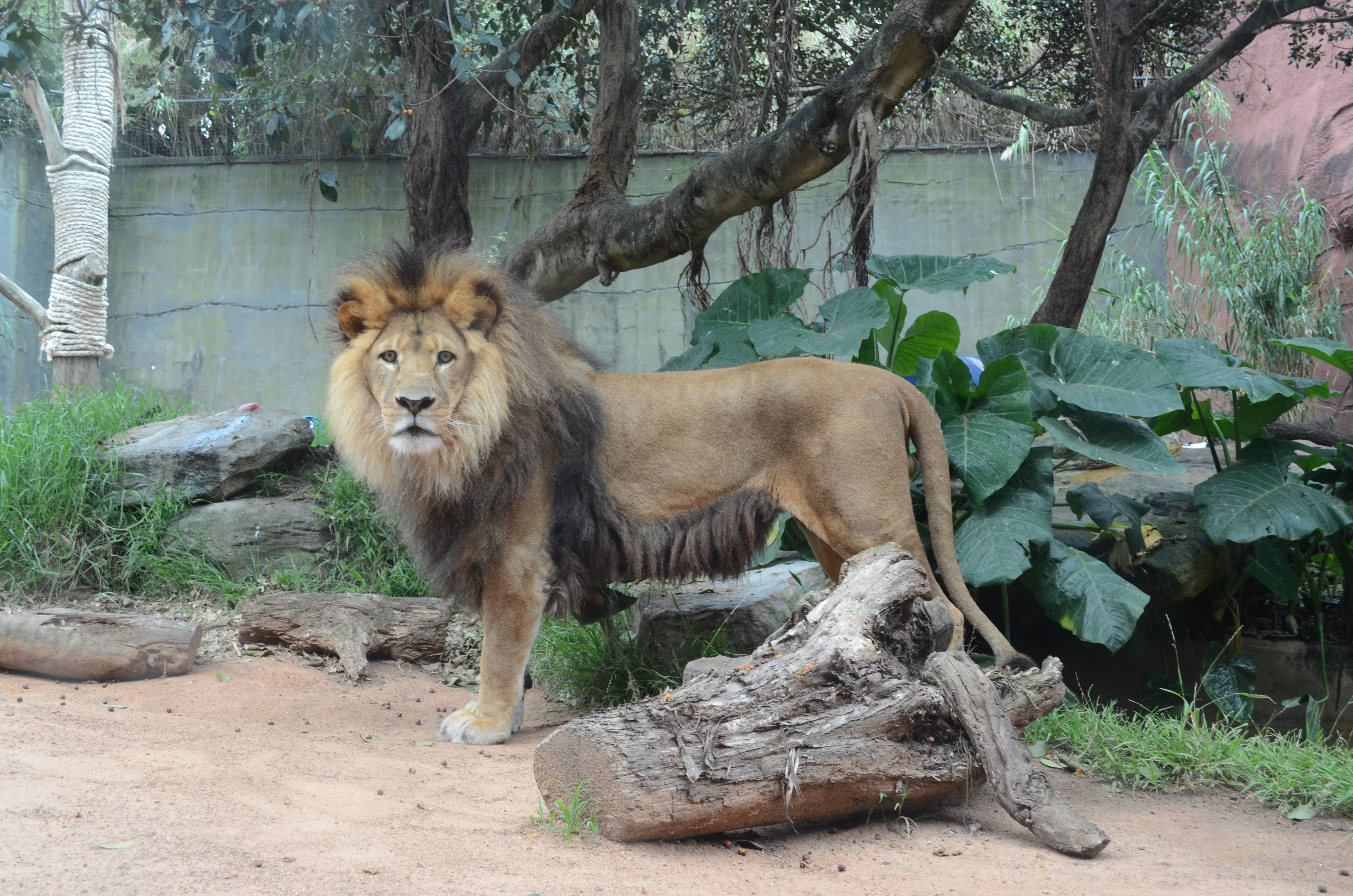 taronga zoo Find hotels near taronga zoo, australia online good availability and great rates book online, pay at the hotel no reservation costs.